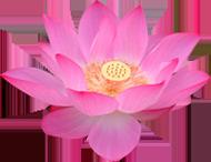 Falun Dafa, Falun Gong